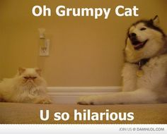 love huskys! haha poor cat...looks so annoyed. huskies can be very annoying too lol