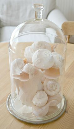 shells and white ironstone shells under a vintage glass bell jar oyster shells in an old apothecary jar lamp shell collections in shadow . Glass Bell Jar, The Bell Jar, Glass Domes, Bell Jars, Beach Cottage Style, Coastal Style, Coastal Decor, Coastal Living, Seashell Display