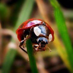 #Ladybug #Ladybugs #TheLadyMarysKeybearer