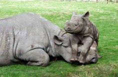 Baby Rhinos need love too!