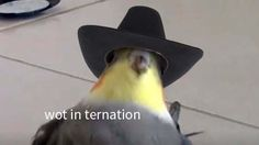 """28 Ducking Great Birb Memes That'll You Quack You Right Up - Funny memes that """"GET IT"""" and want you to too. Get the latest funniest memes and keep up what is going on in the meme-o-sphere. Funny Birds, Cute Birds, Funny Animals, Cute Animals, Reaction Pictures, Funny Pictures, Memes Lindos, Quality Memes, Stupid Funny Memes"""