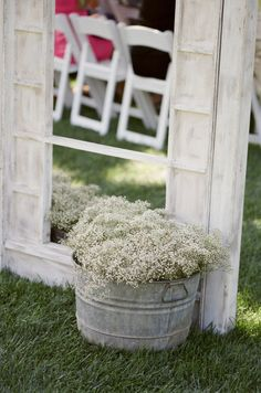 potted baby's breath in a galvanized bucket