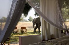 Luangwa Safari House -- Elephant sighting -- Private luxury house