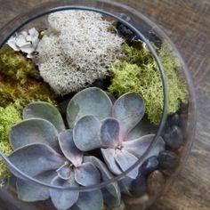 DIY Succulent Terrarium - craft gawker