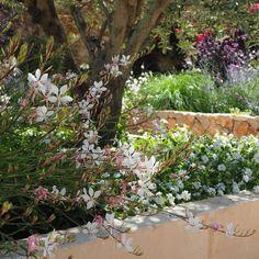 Calicant Mallorca #garden #design #mallorca Garden Design, Plants, Instagram, Paisajes, Flora, Backyard Landscape Design, Landscape Designs, Plant, Yard Design