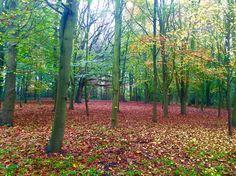 Speke Hall Woodland Walk
