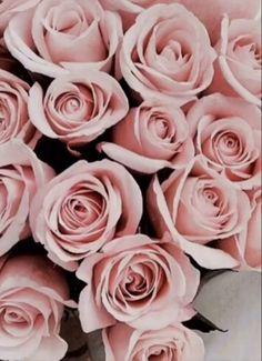 Rose rosa per me❤️