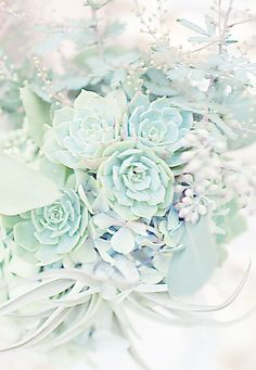 Pale succulents