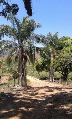 Fazenda Palestina - Querendo - RJ
