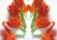 Orange Flowers. Spirit of Beauty. Photo by Solveig Schmid.