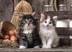 Cats kittens ღ Sweet Cat Paws ღ Mačky mačiatka ღ Cute Kittens, Cats And Kittens, Clementoni Puzzle, Puzzle 1000, Photo Jigsaw Puzzle, Jigsaw Puzzles, Cat Paws, Dog Cat, Image Chat