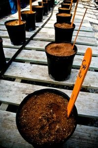 Urban gardeners: Have you ever gotten your soil tested?