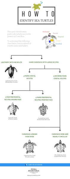 How to identify sea turtles #wildlife