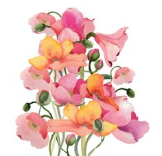 Rosy Poppies by DeepCoveFlowers on Etsy, $20.00