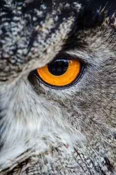 Free download of this photo: https://www.pexels.com/photo/gray-owl-showing-orange-and-black-left-eye-148275/ #bird #animal #owl