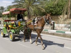 Horse and Carriage, Tozeur, Tunisia, North Africa, Africa