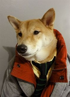 Menswear Dog is a 3 year old shiba inu living in NYC with a panache for all things style.