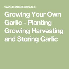 Growing Your Own Garlic - Planting Growing Harvesting and Storing Garlic