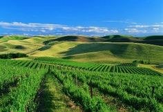 Leonetti cellars - Walla Walla valley merlots - washington state