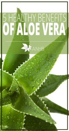 5 Healthy Benefits of Aloe Vera - All Natural Home and Beauty