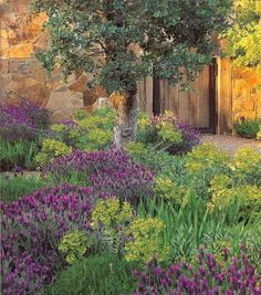Lavender and Euphorbia - by Ron Lutsko -