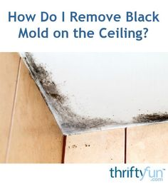 Diy Mold Remover, Bathroom Mold Remover, Mold And Mildew Remover, Mold Removal, Kill Black Mold, Clean Black Mold, Remove Black Mold, Cleaning Mold, Household Cleaning Tips