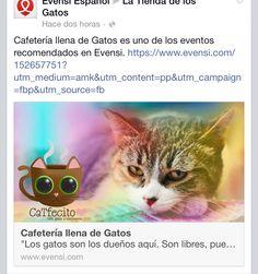 Gracias a todos los que no apoyaron con la difusión . . Meoeww!!! #catfecito #cafeteriallenadegatos