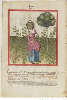 IBN BUTLÂN , Tacuinum sanitatis 15. Jhd Latin 9333  Folio 21v