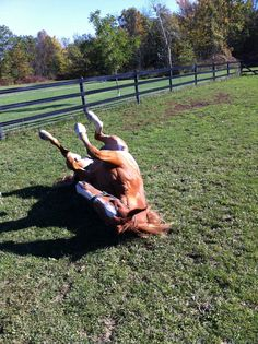 """Love horses - """"THAT'S the spot!"""""""