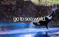 Go To Sea World. #Bucket List #Before I Die