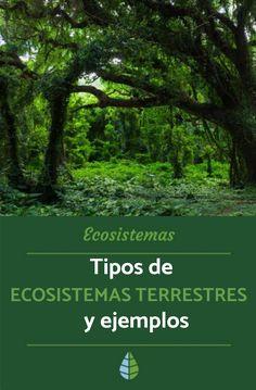 Tipos De Ecosistemas Terrestres Ejemplos Y Características Resumen Tipos De Ecosistemas Ecosistemas Proyectos De Ecosistemas