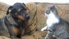 SHOT THROUGH THE HEART AND YOU'RE TO BLAME. | 40 Cats Who Give Love A Bad Name