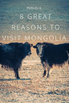 8 great reasons to travel to Mongolia in 2017. Mongolia has been one of the most amazing destinations I have been throughout the past 10 years. The country is incredibly unique!