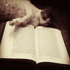 Reading a book !