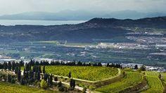 Stunning Valpolicella looking over Lake Garda.  The Allegrini La Poja vineyard is picturesque.