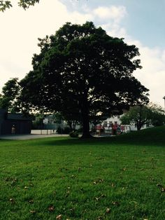 Scholl tree