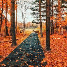 University of Toronto, Mississauga, Canadá I Arjun Yadav Photographer Really Scary Halloween Costumes, Magical Forest, University Of Toronto, Lake Forest, Beautiful Landscapes, Ontario, Nature Photography, Travel Photography, Beautiful Places