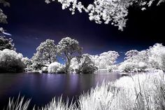 Infrared photography.. think i need to figure this out!