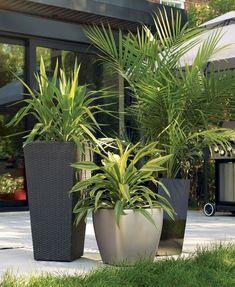 Unique Modern Precast Planters To Make Your Outdoors Stylish Palmeras in cemento macetas