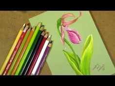 Let's Draw and Paint a Lady Slipper in Colored Pencil!. . . I can't do this but totally amazing to watch this video. . .