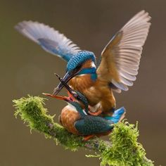 Photographer Takes Perfect Snap Of Kingfisher After Years Trying - Man finally captures the perfect kingfisher photo after 6 years and 720000 attempts