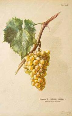 gallesio pomona italiana - Cerca con Google