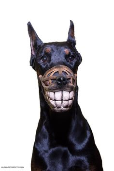 Funny Smiling muzzle for dog Doberman Pit Bull German Shepard Bull Terrier Pinscher Husky funny dog accessory - Smiling dog dobermann USD) by WufWufStore Doberman Funny, Doberman Dogs, Dachshunds, Doberman Pinscher Puppy, Dog Muzzle, Best Dog Training, Agility Training, Dog Agility, Training Equipment