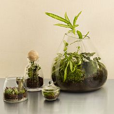 8 cool DIY terrariums | Make it now | Sunset.com I've made a couple really cool succulent and air plant terrariums but I'd like to try something leafier like a fern for variety.  Definitely a few for the kitchen window sill.