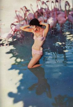 1950s model Carmen Dell'Orefice photographed surrounded by flamingos wearing a bikini. This photo was taken in the Bahamas by Norman Parkinson for Vogue 1959.