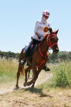 Margot Chazel Riding Helmets, Horses, Lifestyle, Hats, Animals, Animales, Hat, Animaux, Horse