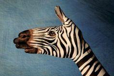 hand painted like a wild zebra