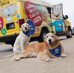It's August! Pet therapy dogs Star & Dover like to help kids keep their canines sparkling. You can help kids keep their teeth clean too by learning more about our Mobile Dental Clinic. http://www.stmarys.org/dental-care-kids