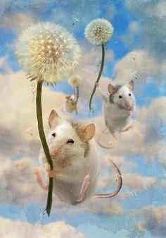 Dandemouselings by Aimee Stewart