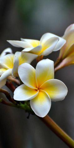 Oriental, Joy, Nature, Plants, Backgrounds, Trees, Vegetables, Flowers, Joy Of Life